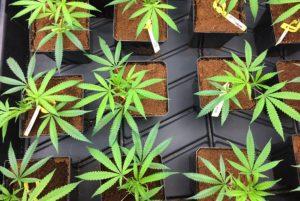 choosing strains