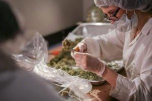 marijuana education